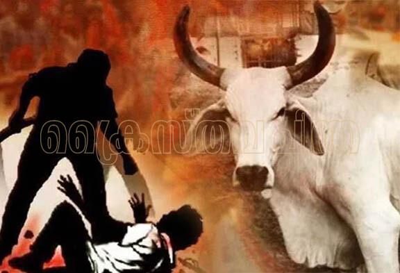 ഇന്ത്യ ചരിത്രത്തിലെ പശുവും ഹിന്ദുത്വ രാഷ്ട്രീയത്തിലെ വിശുദ്ധ പശുവും (തുടര്ച്ച)